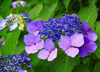 あじさい庭園220107.jpg